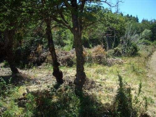 fotos de podas y limpieza de terrenos arreglo de parques