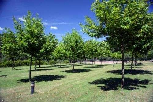 Fotos de mantenimiento de parques y jardines desmalezado for Mantenimiento de parques y jardines