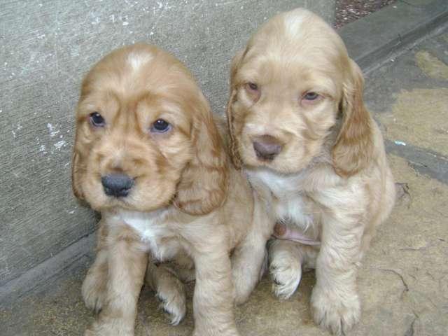 venta de cachorros argentina: