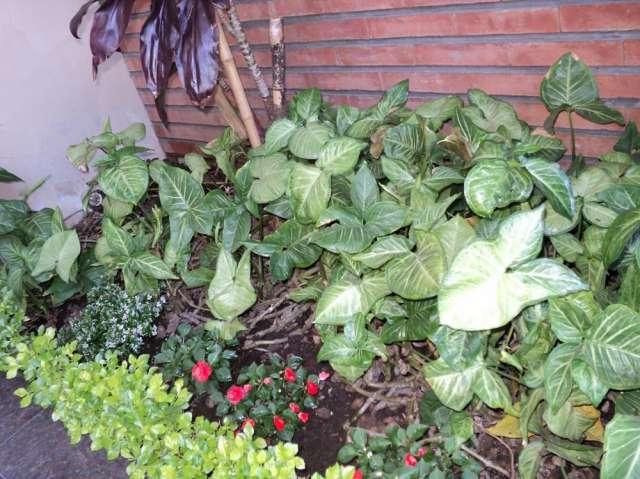 Jardineria y paisajismo flower power jardinera u for Servicios de jardineria y paisajismo