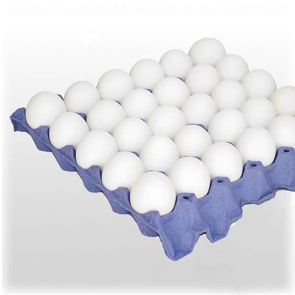 Venta de huevos de granja al por mayor