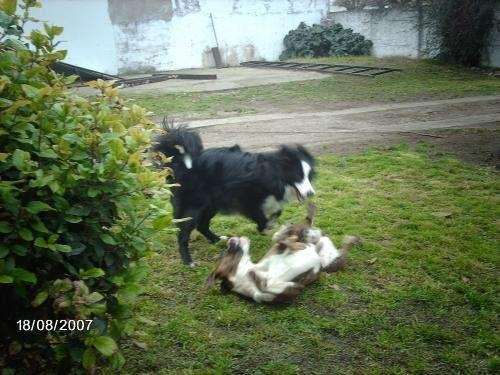 Guarderia canina