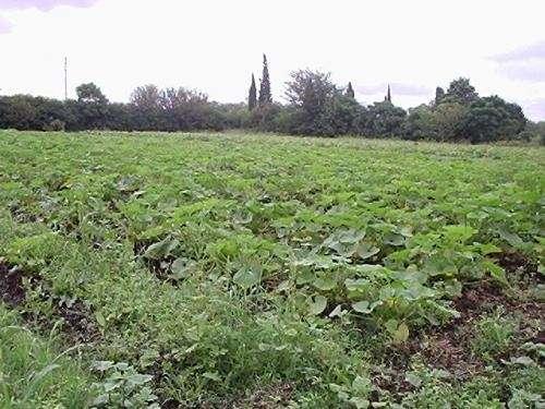 Alquilo 2 ha en moreno para quinta de verdura o vivero con agua y luz