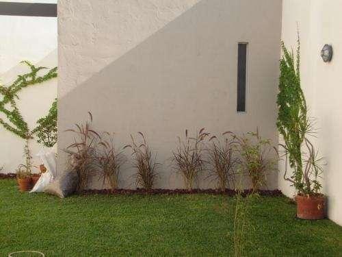 Diseño y mantenimiento de jardines y balcones