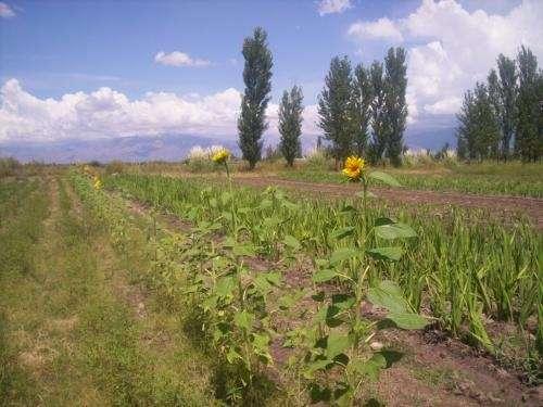 Tunuyan finca en la primavera 10 hectáreas!
