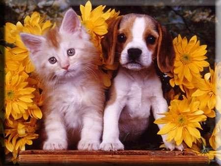 Peluquero canino para veterinaria petshop