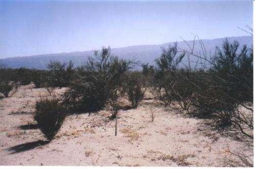 Campo 174 hectareas la rioja valle antinaco ? la rioja