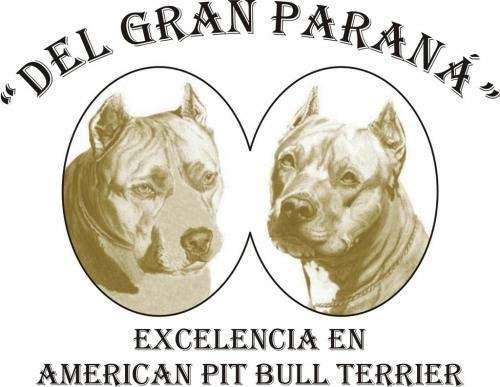 "Cachorros pit bull - criadero ""del gran paraná"""