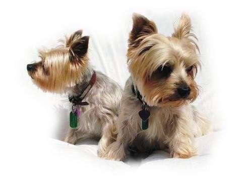 Medica veterinaria especialista en pequeños animales