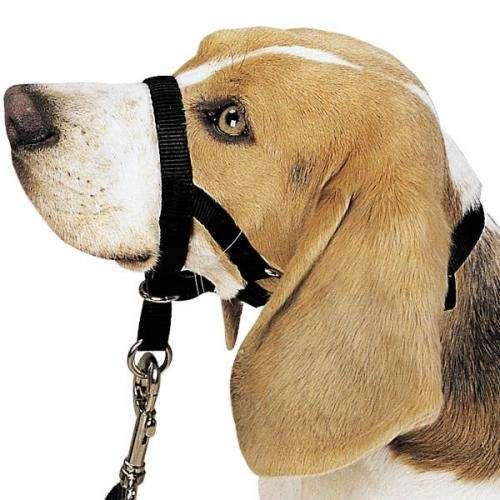 """Collar """"sweetdog"""" para perros antitironeo. (tipo halti)"""
