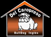 Bulldog Ingles Del Caropreso