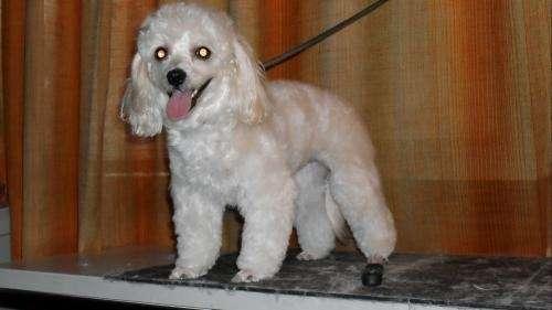 Peluqueria canina profesional todas las razas ! promocion x razas voy a domicilio en zona sur, c.f