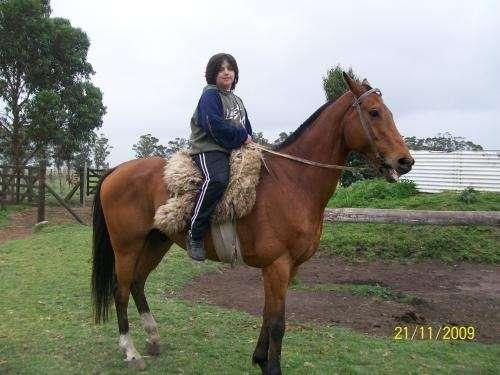 Vendo caballo puro de salto