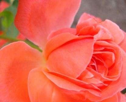 Jardineria y mantenimiento