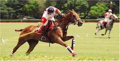 Vendo caballos pura sangre, polo, 1/4 milla, salto