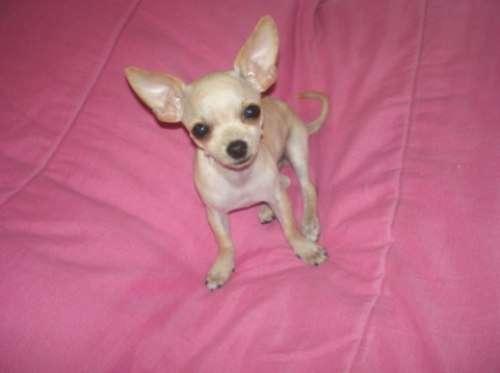Fotos de Colchones, almohadones colchonetas para perros y gatos 4