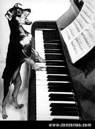 Clases de piano / teclados