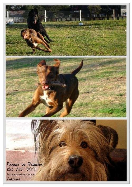 Paseo de perros / terapia de paseos
