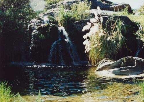 Campo mina clavero