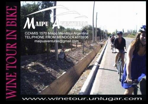 Tour del vino y el olivo en bicicleta