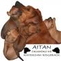 Cachorros Rhodesian Ridgeback