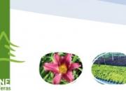 En vivero tesone contamos con gran variedad de plantas, arboles, arbustos, frutales, coniferas, herbaceas entre otros productos. conozcanos!