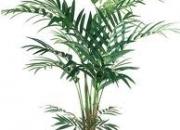 Vendo palmeras.