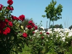 Jardinería paisajismo servicios jardines hue