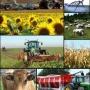 Insumos Agropecuarios