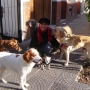 Paseador Canino en Floresta Villa Luro Monte Castro