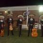 MARIACHIS :: show, contratacion, precios, mariachis show original