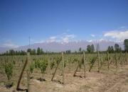 Compro Finca en Mendoza