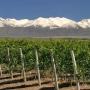 77hta 26 hta con viñedos en Montañas + Bodega pequeña vde agente