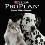 Alimentos para mascotas deliverys las 24 hs inclusive sab dom y fer en bolsas de 1 a 30 kg - 5355-1771 y cel 15-6953-3988 las 24 hs