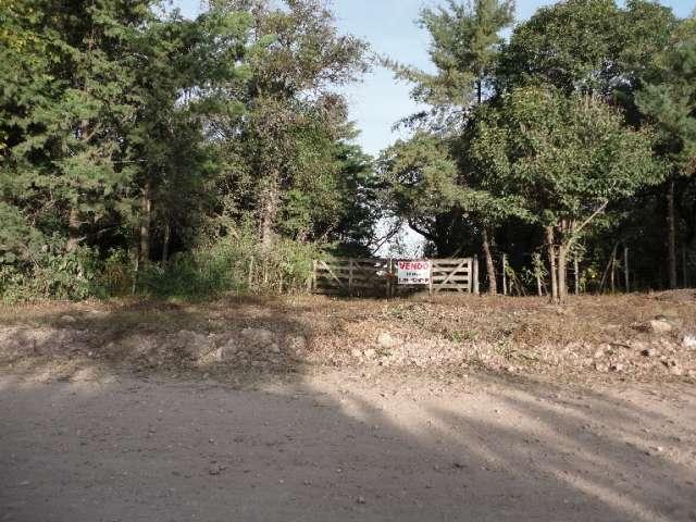 Terreno de 12 hectareas en camino al cuadrado