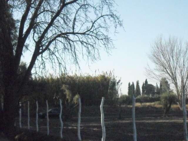 Fotos de Vendo finca en mendoza (8 hectareas) 2