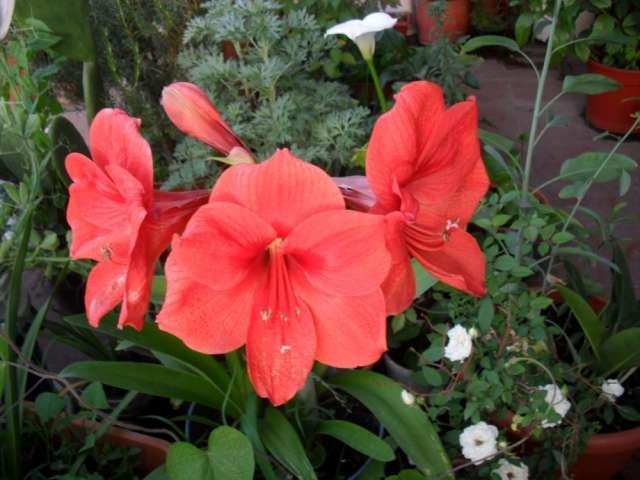 Duilio, consultor floral, consejero sexual y sentimental