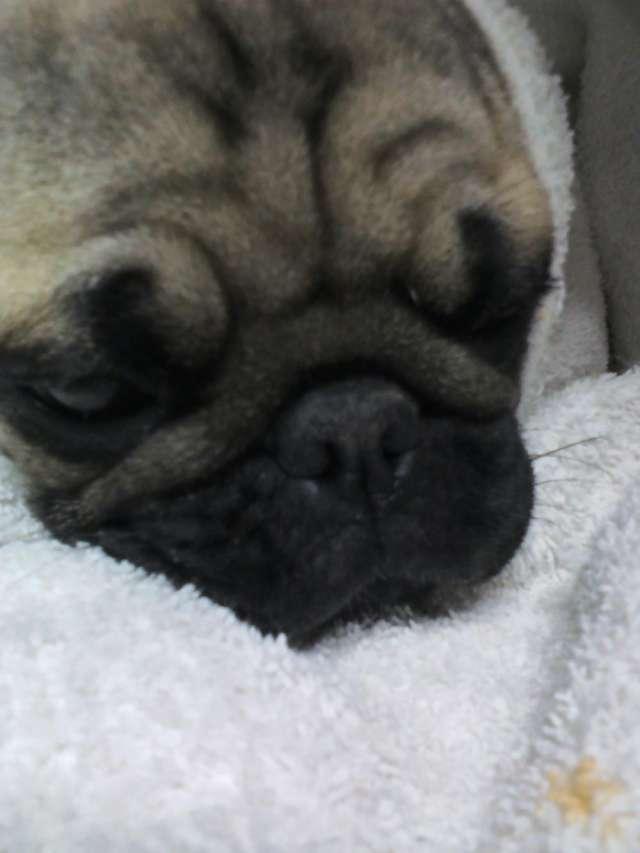Peluqueria canina y boutique canina