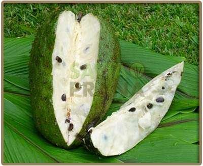 Pulpa de guanábana o graviola concentrada sin conservantes