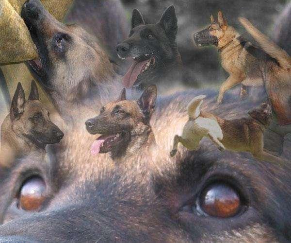 Adiestramiento canino en capital federal