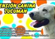 PENSION CANINA TUCUMAN, el segundo hogar de tu mascota