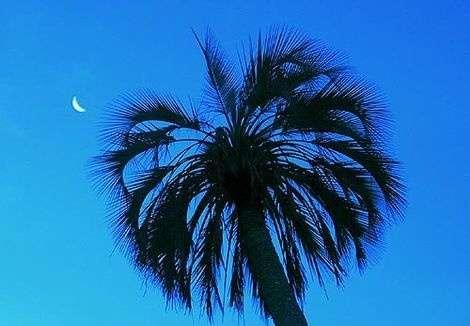 Vendo palmeras yatay de 7 a 10 mt alto