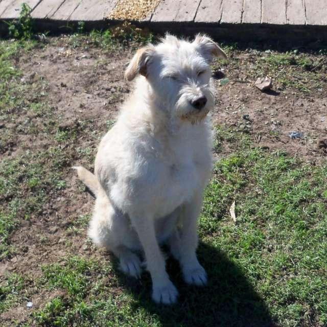 Fotos de Busco hogar para cuatro perros, juntos o separados 3