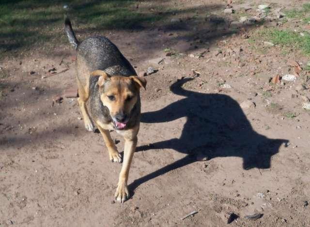 Fotos de Busco hogar para cuatro perros, juntos o separados 2