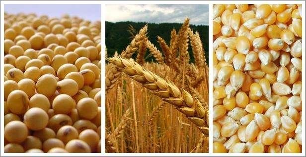 Disponemos de cereales y sus sub productos para exportacion desde el brazil ( commodities)