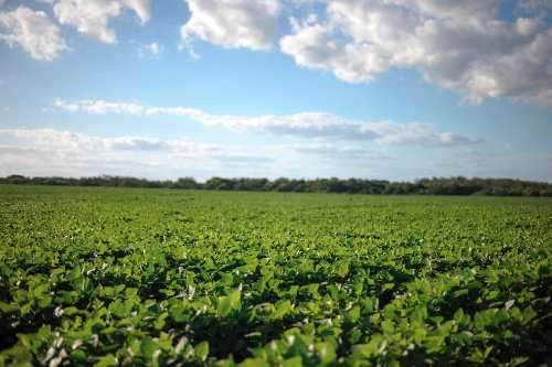 72 hectareas agricolas en uruguay, dolores, cerquita del puente, 14500 dol la hectarea