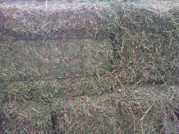 Fardos y semilla de alfalfa santiagueña
