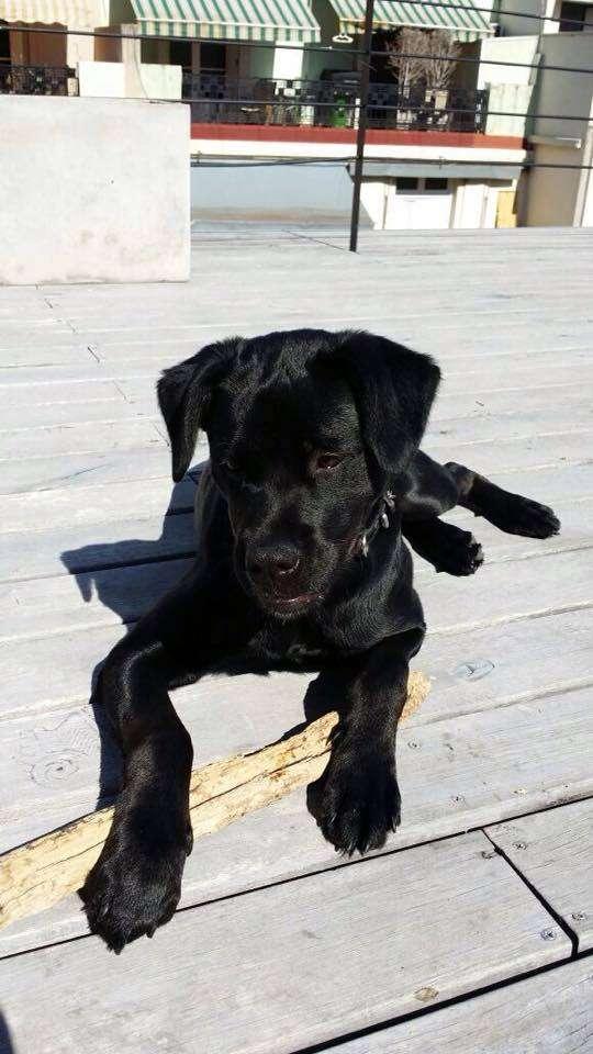 Perrita cachorra 6 meses en adopcion. urgente!