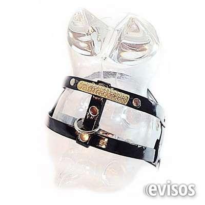 Fotos de Mascotas fashion - accesorios y ropa para mascotas. 4