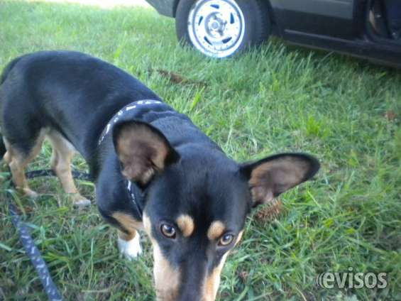 Pensionado canino y transporte de mascotas a 1 cuadra gral paz